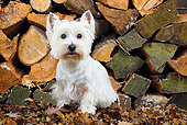 DOG 02 JD0003 01