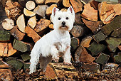DOG 02 JD0004 01