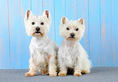 DOG 02 JD0007 01