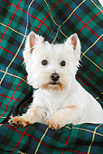 DOG 02 JD0008 01