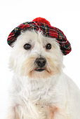 DOG 02 JD0009 01