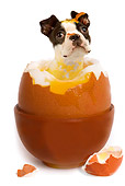 DOG 02 JE0003 01