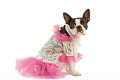 DOG 02 JE0005 01