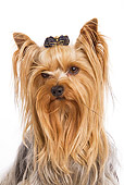 DOG 02 JE0007 01