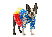 DOG 02 JE0010 01