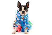 DOG 02 JE0011 01