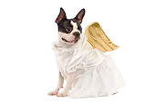 DOG 02 JE0012 01