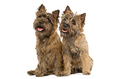 DOG 02 JE0016 01