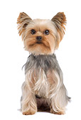 DOG 02 JE0017 01