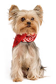 DOG 02 JE0018 01