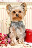 DOG 02 JE0027 01