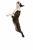 DOG 02 JE0029 01