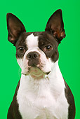 DOG 02 JE0031 01