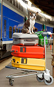 DOG 02 JE0035 01