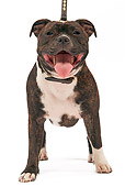 DOG 02 JE0041 01