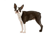DOG 02 JE0046 01