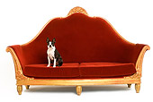 DOG 02 JE0050 01