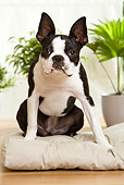DOG 02 JE0053 01