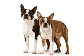 DOG 02 JE0054 01