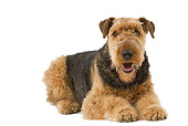 DOG 02 JE0057 01