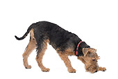DOG 02 JE0060 01