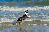DOG 02 JE0063 01