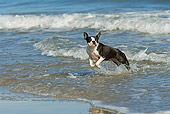 DOG 02 JE0064 01