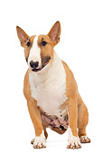 DOG 02 JE0065 01