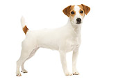DOG 02 JE0066 01