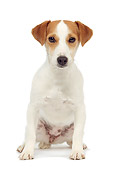 DOG 02 JE0067 01
