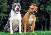 DOG 02 JE0068 01