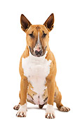 DOG 02 JE0073 01