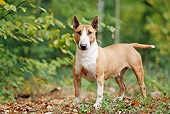 DOG 02 JE0076 01