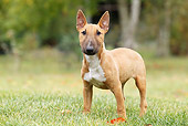 DOG 02 JE0077 01