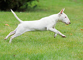 DOG 02 JE0080 01