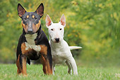 DOG 02 JE0083 01