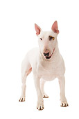 DOG 02 JE0086 01