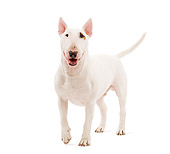 DOG 02 JE0087 01
