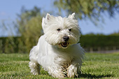 DOG 02 JE0093 01