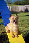 DOG 02 JN0003 01
