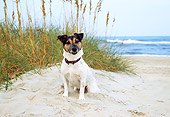 DOG 02 JN0005 01