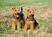 DOG 02 JN0010 01