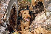 DOG 02 JN0011 01