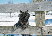DOG 02 JN0012 01