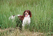 DOG 02 JN0013 01