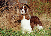 DOG 02 JN0020 01