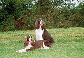 DOG 02 JN0021 01