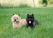 DOG 02 JN0025 01