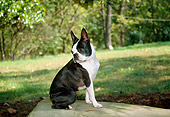 DOG 02 JN0026 01
