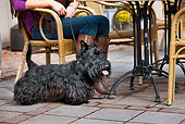 DOG 02 JS0003 01